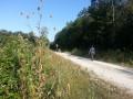 Cardères en bord de chemin blanc