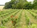 Carré de vignes