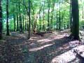 Grand tour dans la Forêt Domaniale de Verzy