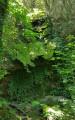 Cascade de Bonnan en période sèche.