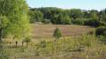 Ceps de vigne au pied de la voie ferrée à Villeneuve-sur-Yonne