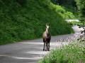 Schlucht - Hohneck - Lac de La Lande- Chitelet- Collet