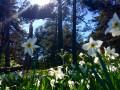 Fleurs à proximité des Chaumasses