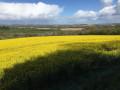 Champ de colza en fleur et panorama sur Aunay-sur-Odon au loin