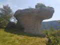 Champignon préhistorique