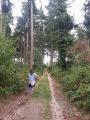 Changement d'ambiance forestière avec les résineux