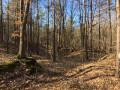 chaos rocheux dans le Bois des Layes