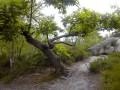 La Forêt des Grands Avaux