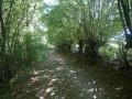 Chemin à l'ombre des arbres