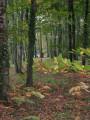 Chemin Aristide Briand