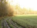 Chemin au bord des bois