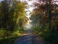 Chemin au coeur de la forêt