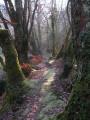 Chemin au-dessus du ruisseau