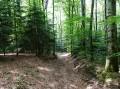 Chemin bien à l'abri dans la forêt