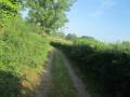 Chemin bocager de Quemineau