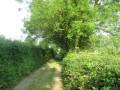 Chemin bocager de Wignehies