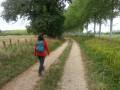 Chemin bordé d'arbres au milieu des herbages