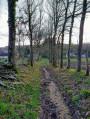Chemin bordé de grands arbre en pente