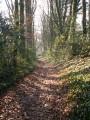 Chemin bordé de hêtres
