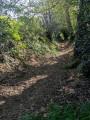 Chemin creux au Nord du circuit.