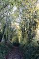 Chemin creux près du Grand Villiers
