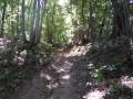 Chemin creux sablonneux