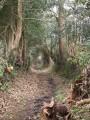 Par les chemins creux autour de Locronan