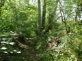 Chemin creux