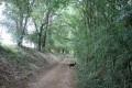 Chemin d'exploitation en bordure de bois