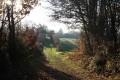 Les Bois de Celles-sur-Belle - 2