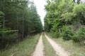 Chemin dans la forêt vers la Lauze