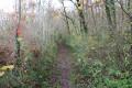 Chemin dans le bois Chauvin