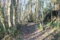 Chemin dans le Bois de Celles