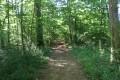 Chemin dans le Bois de Chavenois