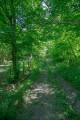 Chemin dans le bois de la Fontaine des Biches