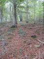 Chemin dans le bois de Martigny