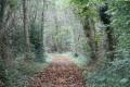 Chemin dans le bois du Juge