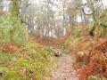 Chemin dans le Rocher de Bouligny
