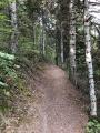 Chemin dans les arbres