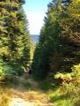 Chemin dans les Bois Noirs