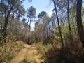Chemin dans un paysage bourian