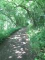 Sentier du moulin de la Salmagne à Bettignies