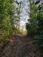 Chemin de forêt à la fin du mois de.mars