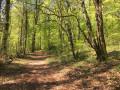 Chemin de limite de chasse dans la forêt de Sommeval