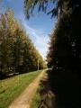 Chemin de rue Basse
