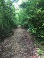 chemin de terre