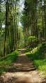 Chemin des Châtaigners