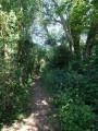 Chemin des Mauviards
