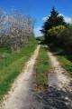 Chemin des Taillis