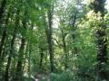 Chemin du grand Schnekenberg